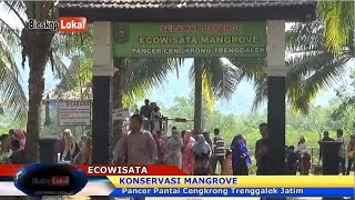 "Cerita Di Balik Konservasi Mangrove"" Pancer Pantai Cengkrong - ""Trenggalek JATIM"""