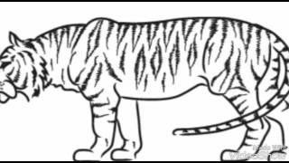 Как нарисовать тигра.(, 2016-08-20T09:33:30.000Z)