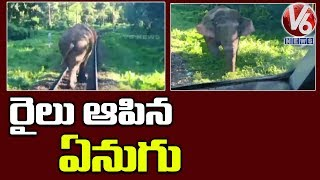 Elephant Stops Train In West bengal | V6 Telugu News