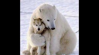 Забавная дружба животных / Friends