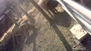 Grzesinka z kamerą wśród zwierząt #1 Dzik atakuje!
