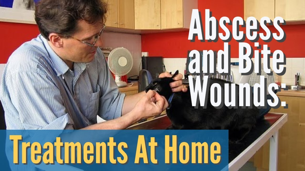 Download Abscess and Bite Wounds: Treating At Home