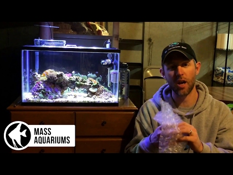 How To MOVE AQUARIUMS And FISH: How I MOVED ALL My FISH TANKS To A NEW HOUSE!