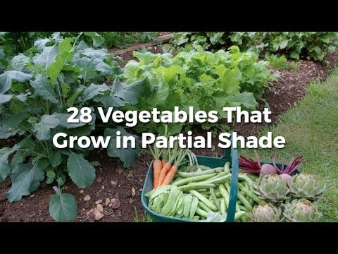 28 Vegetables That Grow In Partial Shade Small Footprint