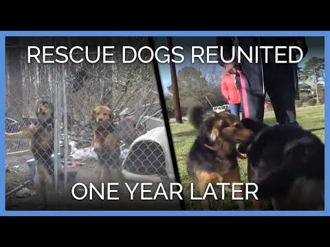 Dog BFFs Reunite One Year After Their Rescue