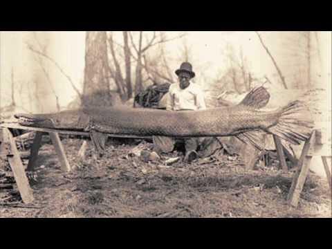 Kentucky's Alligator Gar