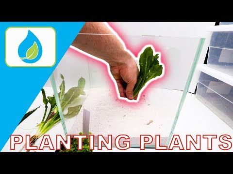 HOW TO PLANT AQUARIUM PLANTS PROPERLY!