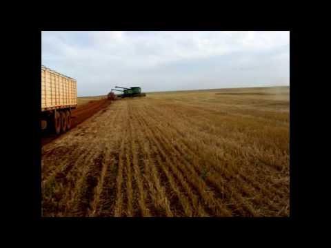 Harvesting in Paraguay
