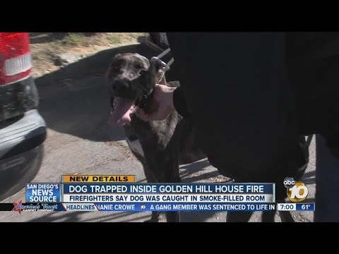 Crews help rescue dog from Golden Hill house fire