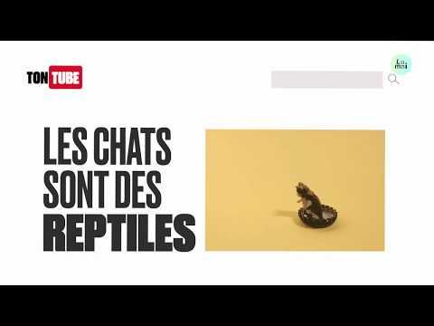 """C'est quoi une """"fake news"""" ? Les clés du Numérique"""