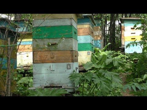 Что дает пчелам наступивший июнь