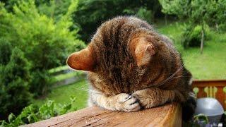 смотреть видеоклипы 2014  Смешные коты