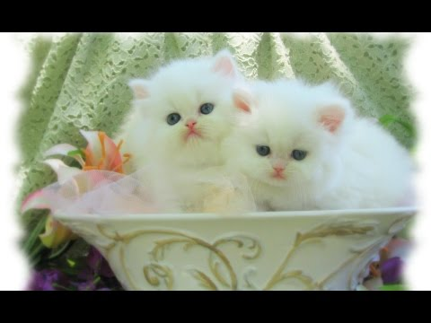 Cutest kittens in the world, Cute Cats Compilation, Top 10 Funny Video Funny Cats 2016 Part 2