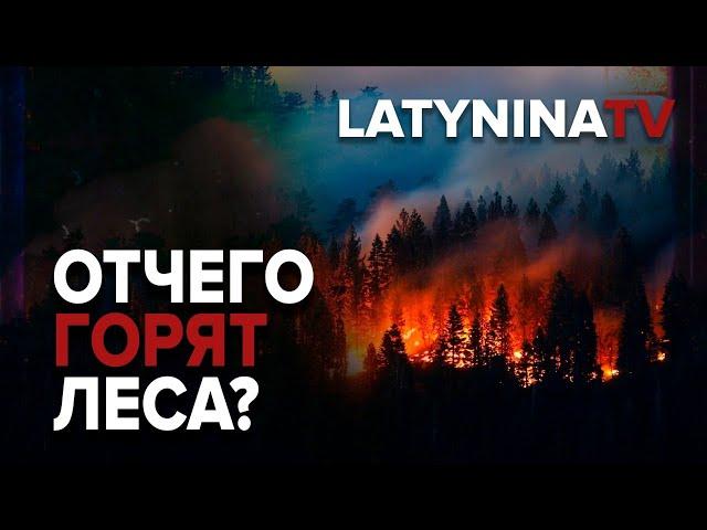 Юлия Латынина /Разбираем: Отчего горят леса?/ wildfires / LatyninaTV /