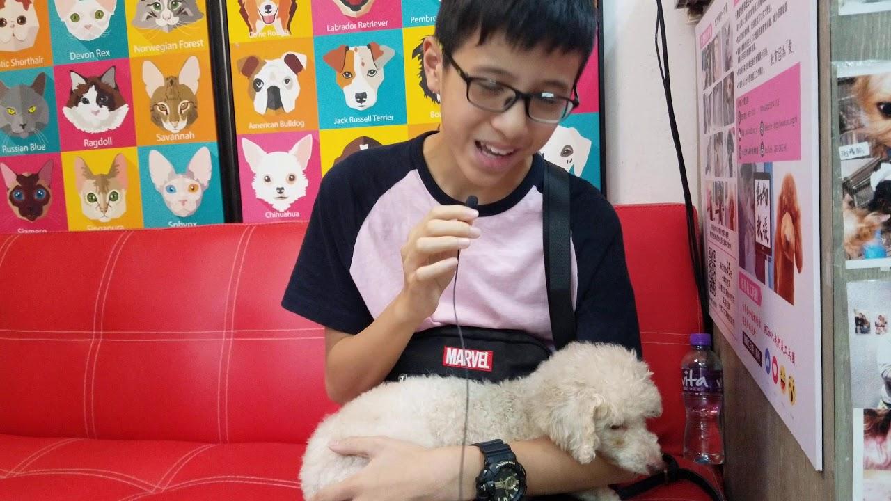 ARC 動物領養中心 - 成功領養 - 領養者心聲 - YouTube