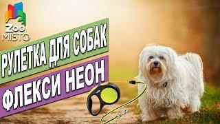 Рулетка для собак Флекси Неон | Обзор рулетки Флекси | Flexi Neon review