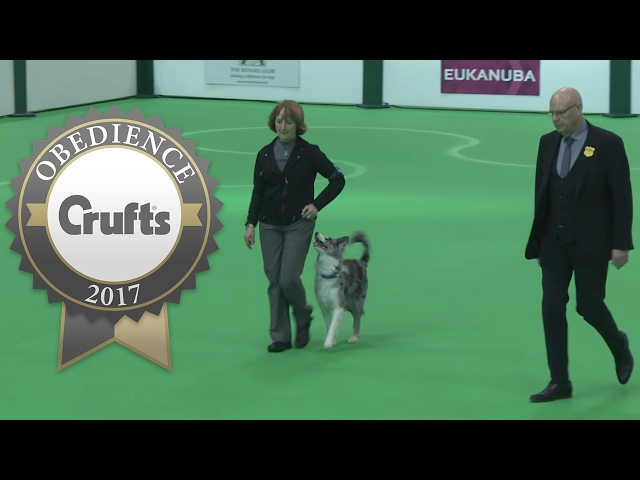Obedience Championship - Bitches - Part 15 | Crufts 2017