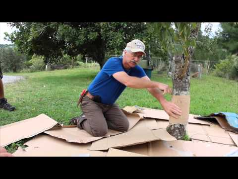 Permaculture Orchard TIP
