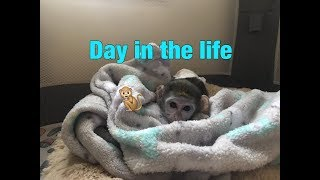 Baby monkey | A day in the life of Max