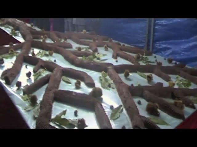 IL TRONCO DI CASTAGNE DI BAGNOLI IRPINO - [Guinness dei Record]