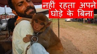 ये बंदर नहीं रहता अपने घोड़े के बिना | Amazing friendship of Monkey and Marwari horse