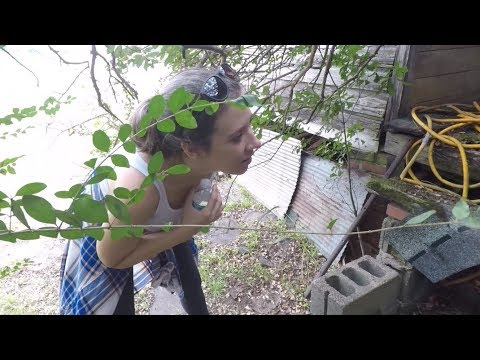 Metal Detecting w/my Bride: Viewer Mail & Cotton Ready for Harvest