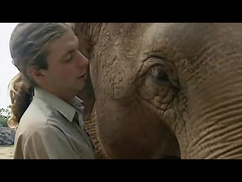 Testing Elephants Intelligence - The Zoo Keepers - BBC