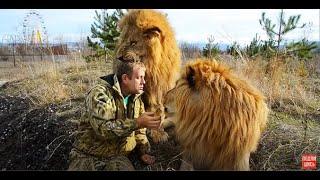 Сумасшедшее видео КАК ЧЕЛОВЕК ОБЩАЕТСЯ СО ЛЬВАМИ!!!  Тайган.Крым.