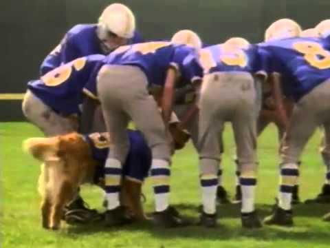 air bud Golden Receiver trailer