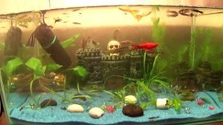 Полная чистка аквариума.Аквариумистика