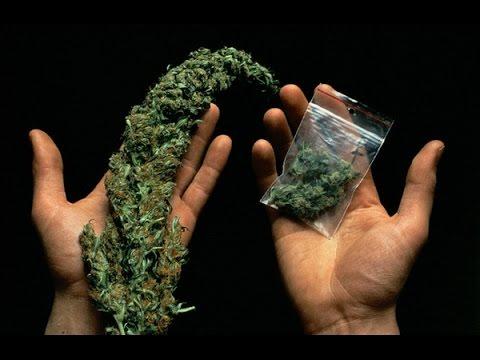 21+ BBC . В чем вред марихуаны.  Cannabis - What's the Harm.