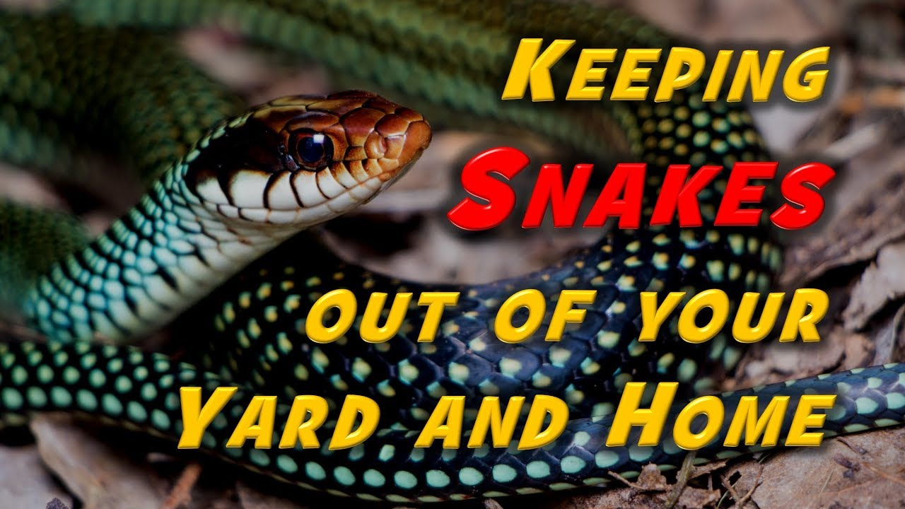 Keeping Snakes Away: Advice from a Wildlife Biologist