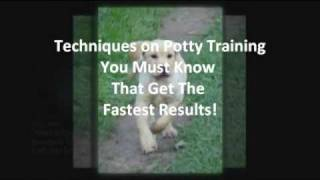 Most Desired Tips for Potty Training Labrador Puppies