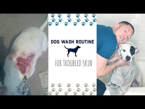 MY PITBULL HAS SKIN ISSUES l WEEKLY WASH ROUTINE