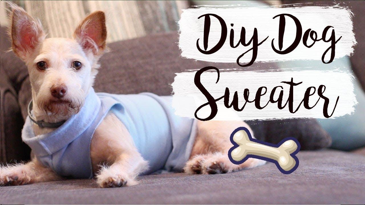 Easy Diy Dog Sweater No Sew Pet Diys Youtube