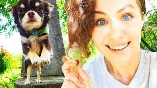 видео Дрессировка собак дома с нуля - собака в машине