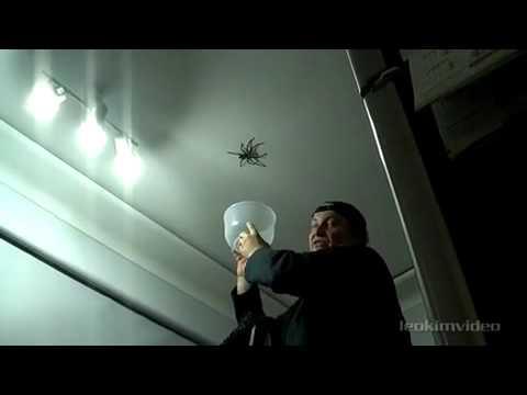 Папа! Поймай паука!