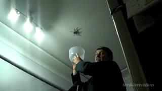 Папа! Поймай паука!(, 2013-02-19T10:54:03.000Z)