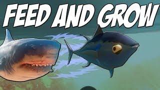 ОЧЕНЬ БЫСТРЫЙ ТУНЕЦ УБЕГАЕТ ОТ АКУЛ, ОБНОВЛЕНИЕ | Feed and Grow Fish