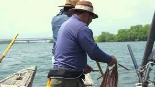 大橋兄弟の長良川サツキマス漁