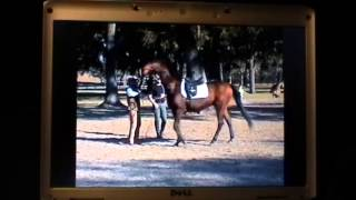 Linda Parelli wife of Pat Parelli Beats Horse- Budweiser Clydesdale Locked Up- Indian Relay Race thumbnail