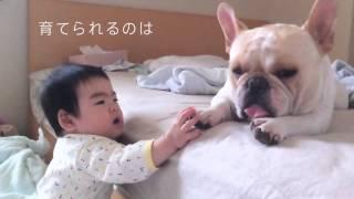 2月14日からベネッセ社「いぬのきもち」のCMにミルコ&お姉ちゃんが出演...