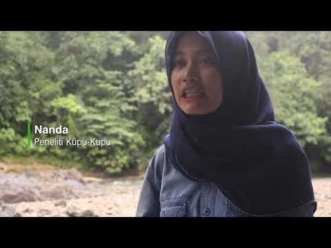 hutan-lindung-sungai-lesan-:-ekowisata-yang-mendunia