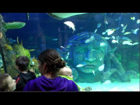SEA LIFE AQUARIUM MICHIGAN GREAT LAKES CROSSING DAY 237 03 ...