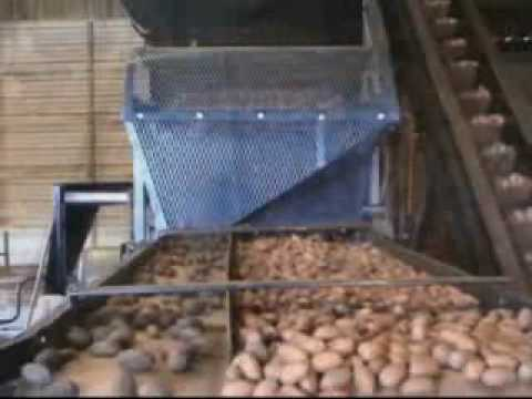 PS10000 Sticktight Pecan Sorter by Roger Holt