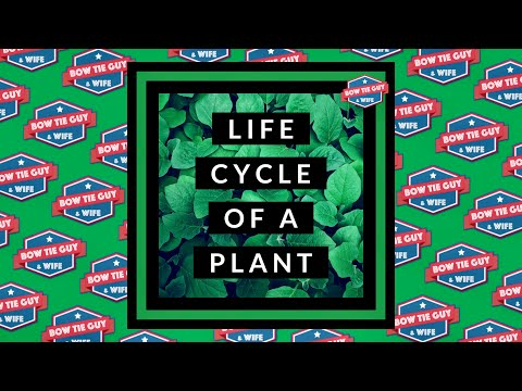 Life Cycle of a Plant (Student Informational Video)