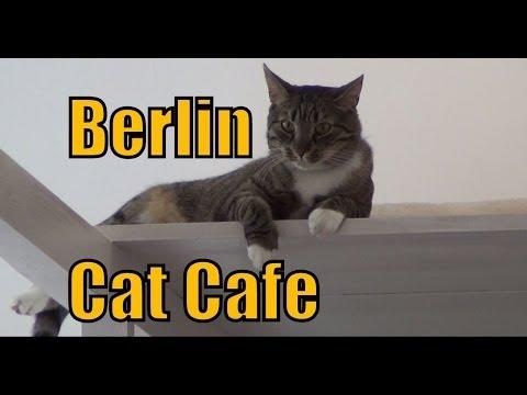 Cat Cafe in