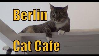 Cat Cafe in Berlin, Germany | Pee Pees Katzencafé