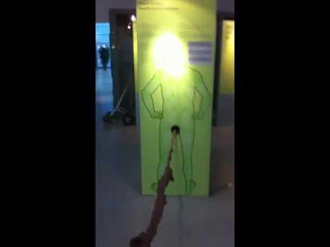 Длина кишечника человека
