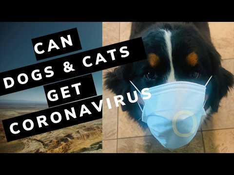 Can Dogs And Cats Get Coronavirus (COVID-19)?
